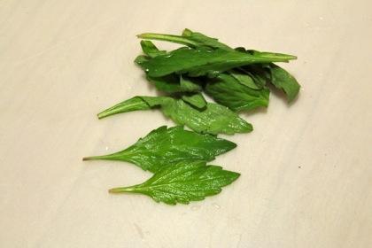 ヨメナの葉っぱ