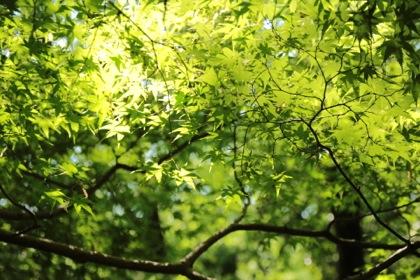 緑が綺麗。