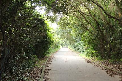森のなかの道。