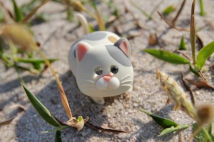 新島で見かけた凶暴な猫