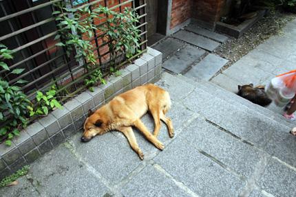 野良犬が多い台湾。
