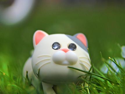 春を待つ獰猛な猫