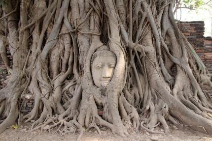 有名な仏像の首