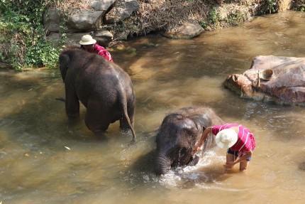 象使いと像