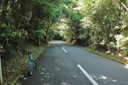 伊豆大島サイクリング いいね。