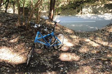 自転車を停めて見にゆく。