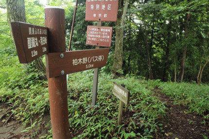 連行峰から柏木野へ