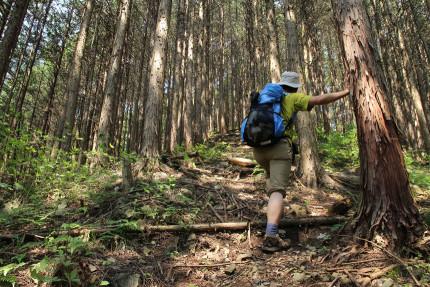 踏み跡を辿ってグイグイと登って行く。