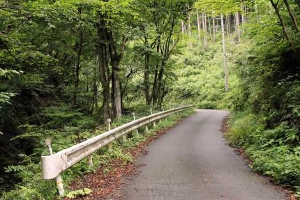 矢沢林道を歩く