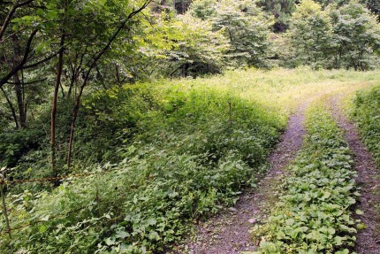 ここから林道を左に外れて沢へ降りて行く。