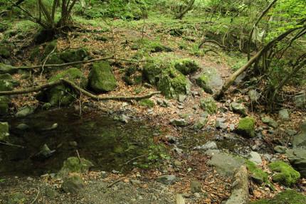 小川の向こうに踏み跡が見える。