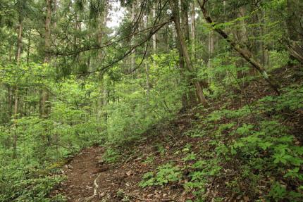 登山道から外れて右側へと登る