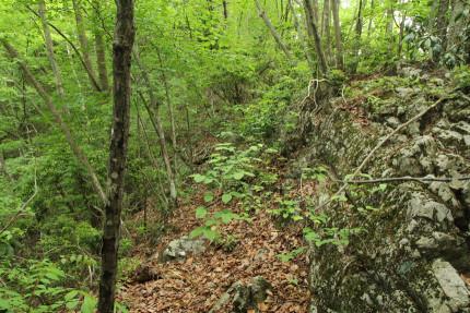 岩がゴツゴツしだす。
