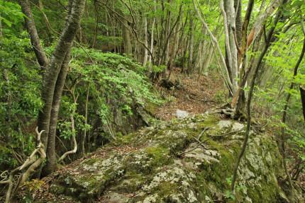 岩が印象的なところ。