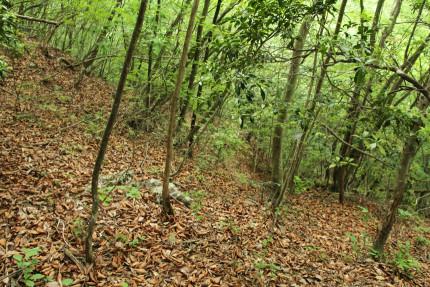 落ち葉カサカサゾーンから下を見る。