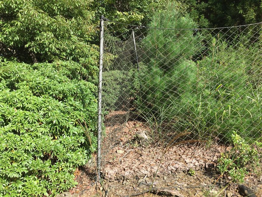 フェンスの左側を歩くこと