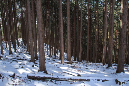 周辺の様子、単調な植林が続く。