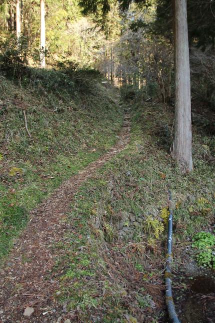 登山道の様子。