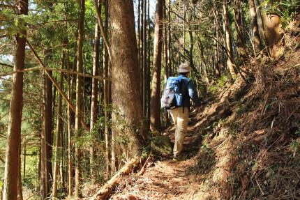 良い感じの登山道
